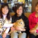 クリン&美ら(ちゅら)&琉那(るな)日記《保護犬ポメラニアンの成長記録》と預かりワンズの本当のお家探し。