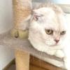 猫がキャットウォークで長く過ごす理由は?