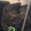 ネコはちょっと頑固だった。退かぬ!媚びぬ!省みぬ! → 猫はオモチャにこうなります…