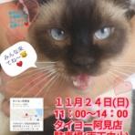NPO法人 茨城県・犬猫共存推進会 公式blog