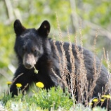 『兵庫県のクマを守る署名』の画像