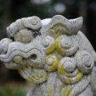 『奈良の正月2020④ 2020/01/07』の画像