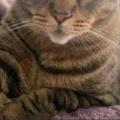 【ネコ】 パソコン作業をしていたら猫が隣にやって来た。今はその時間じゃないでしょ? → 猫はこうした…