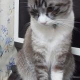 うちの看板猫のサムネイル