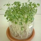『初心者さんでも大丈夫!残り野菜で作る「キッチン菜園」で楽しく節約しよう☆ 2/2』の画像