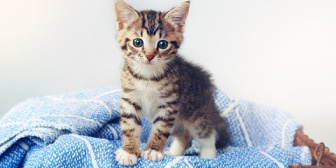 子供が欲しがるので猫もらってきたんだけど、動物嫌いの夫が陥落。猫好きじゃなかった私も甘えられて陥落したw