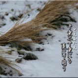 『藁囲い』の画像
