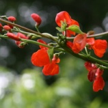 『庭の可愛いものたち・ガーデンフェアのチラシ』の画像