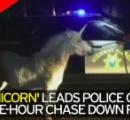 【画像】アメリカでユニコーンが警察に捕獲される