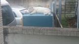 めっちゃふてぶてしい猫見つけたったwww(※画像あり)