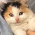 子ネコの頭に「キス」をする。もっとにゃ~ん! → 眠る前の催促です…