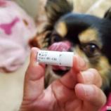 『混合ワクチンへの準備開始☆』の画像