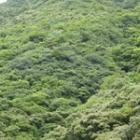 『緑濃い南の森』の画像