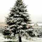 『ハッピー・クリスマス ☆彡』の画像