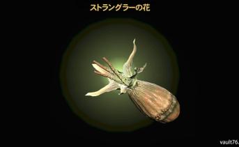 ストラングラーの花(Strangler bloom)