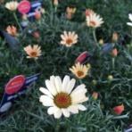 Flower Shop LOBELIA  ロベリア