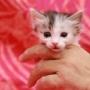 かわいい仔猫の六つ子ちゃん
