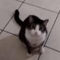 ネコが玄関前にやってきた。外に出たいのでお願いします♪ → 猫はいつもこうなる…