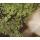 『夜の森』の画像