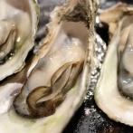 【悲報】ワイ、港町でいわゆる「本物の牡蠣」を無理やり食わされた結果…