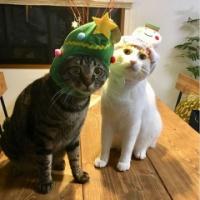 3COINS(スリコ)クリスマスデザインのペット用かぶりもの、やっぱりかわいい♡
