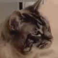 ネコが隣にやってきて、私のことを睨んだ。な、何か用ですか? → 猫はこうなる…