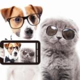 『【携帯セット割禁止】物事の本質を見極める』の画像