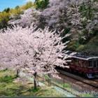 『2020年4月5日:今年も桜は阪急電車とコラボで』の画像