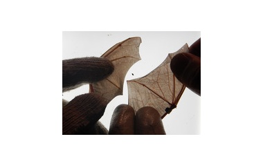 『翼を比べる』の画像