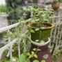 *夏の小庭の小さな変化