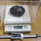 2019年10月 キボシイシガメ身体測定