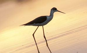 birdpapaの鳥遊録Ⅱ