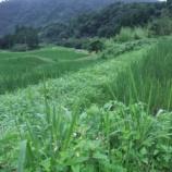 『7人で棚田の草刈り、そしてエサやり?』の画像