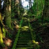 【禁足地】絶対に通ってはいけない恐怖の階段・・・