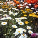 『花盛り』の画像