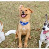 『Everyday Dogs' Club(しつけ訪問型レッスン)』の画像