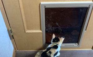 ペット用のドアを取り付けてみた