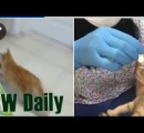 【ぬこ】野良猫が子ネコ連れて病院に トルコ (動画あり)