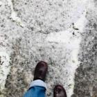『【考えごと】桜満開。雪やこんこん。』の画像
