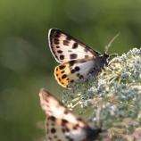 『異常気象と蝶の行方』の画像