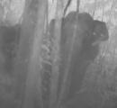 絶滅危惧種のゾウの撮影に成功したぞう