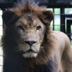 ライオンと旅