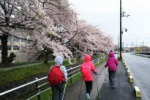 ノルディックウォーキングで交野市内の桜をいろいろ観てきた!