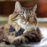 『最高齢の猫』の画像