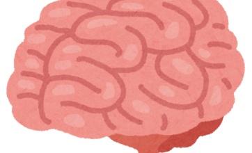 ハンズで人体の一部(脳や心臓)などを売っていると話題に