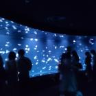『海月空間実装ッ!サンシャイン水族館に行ってきたでござるッ!』の画像