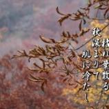 『枯れ葉散る』の画像