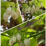 『春ですね!』の画像