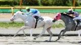 【JRA史上初】白すぎる馬「ホワイトドラゴン」が勝利www(※画像あり)