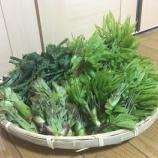 『地方移住での春の楽しみ。大石田での山菜採り。』の画像